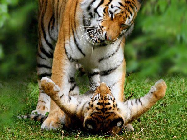 Depuis 1970, la population animale de la Terre a chuté de... 58% !