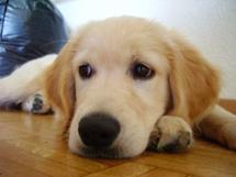 Pourquoi le chien est vraiment le meilleur ami de l'homme