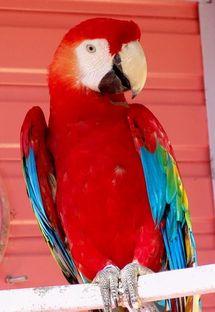 Histoire de perroquets