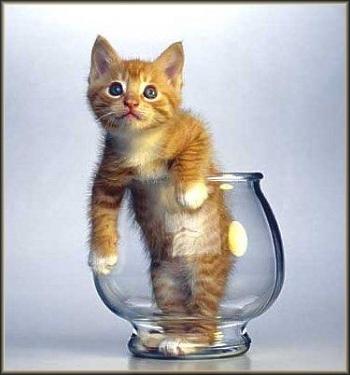 Aimez vous les chats ?