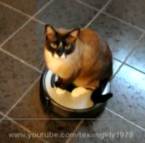 Desperate House Cat !