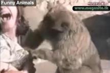 Aimez vous les animaux ?