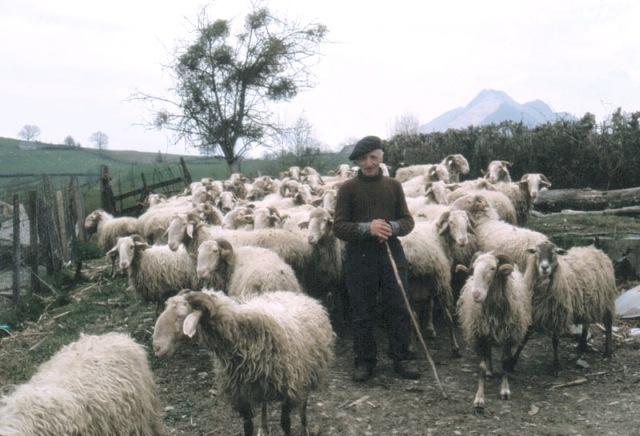 Le berger et le consultant