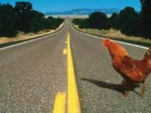 Le poulet qui traverse la route