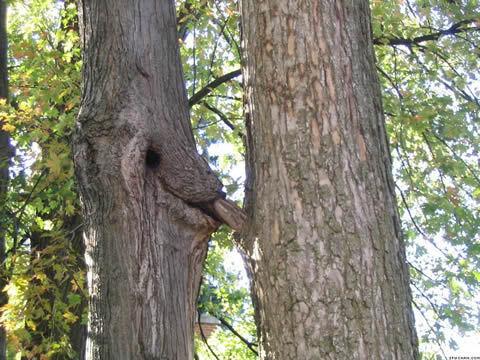 Qui a dit que les arbres étaient de bois ?