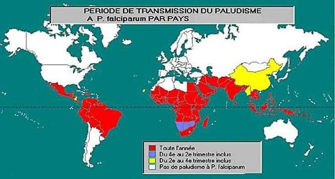 Un nouveau traitement pour le paludisme.
