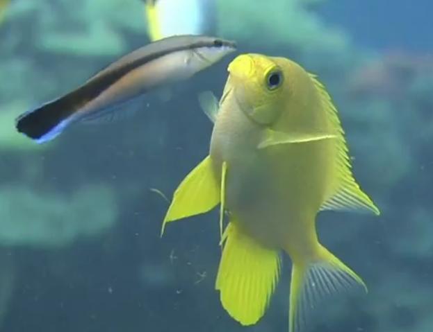 Des images sous-marines magnifiques
