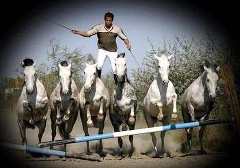 Lorenzo et ses chevaux