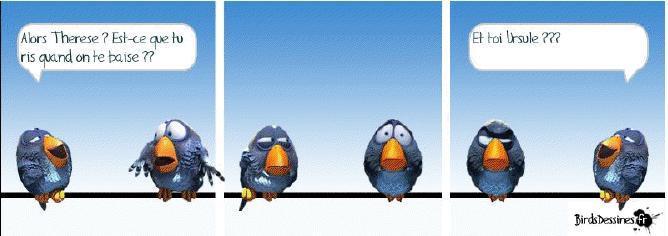 Mots d'oiseaux...