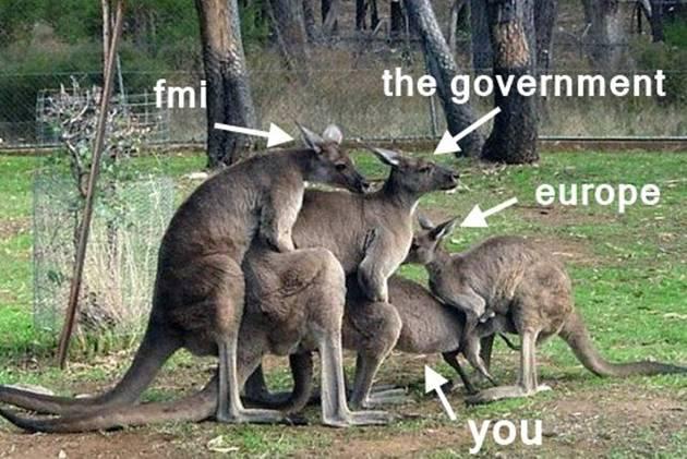 La kangourou est grégaire... et joueur.