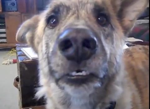 Comment faire parler un chien...