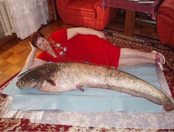 Il est pas frais son poisson ?
