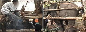Faire de l'éléphant en Thaïlande... ce qu'on cache aux touristes