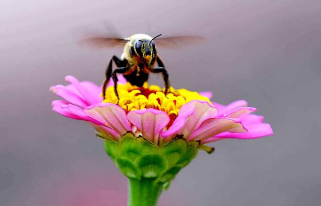 Disparition des insectes : une catastrophe silencieuse
