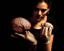 Le prix d'un cerveau