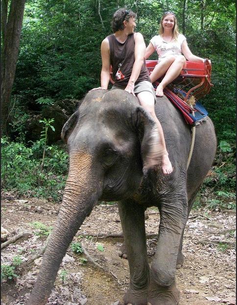 Ce qu'on a fait aux éléphants sur lesquels les touristes se promènent, ravis...
