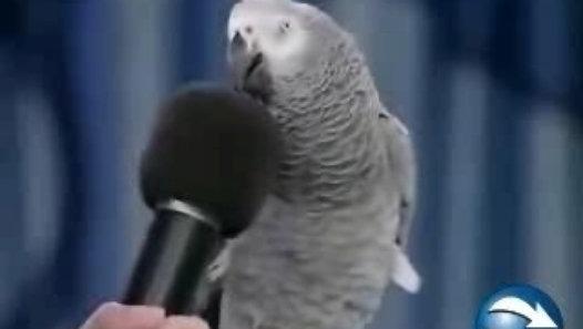 """""""-Pouvez-vous parler au micro ?"""" """"-Micro !"""""""