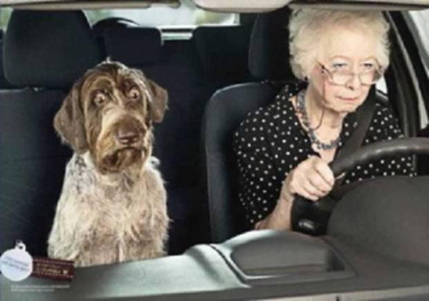 Permis de conduire : La consultation du solde de points est simplifiée