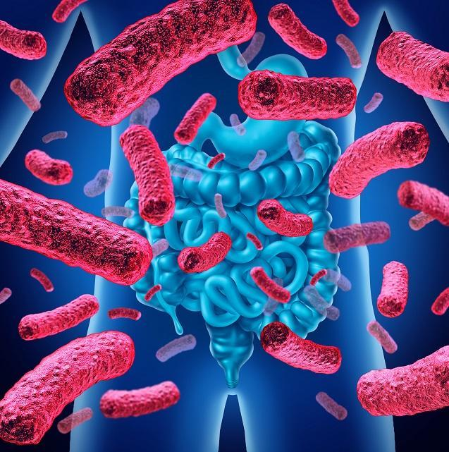 Microbiote : les fabuleux pouvoirs du ventre