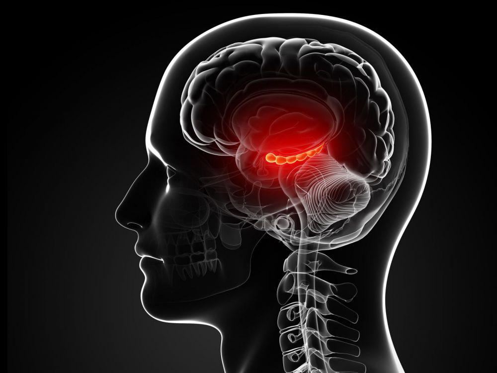 Concrètement, dans les 20 secondes qui suivent l'arrêt du cœur - et donc de la circulation sanguine -, le cerveau n'est plus irrigué par le sang oxygéné.