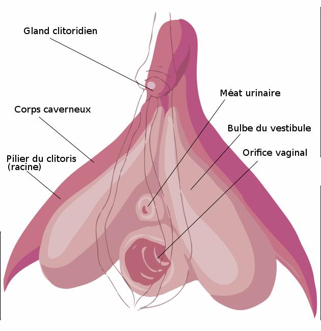 5 trucs à savoir sur le clitoris