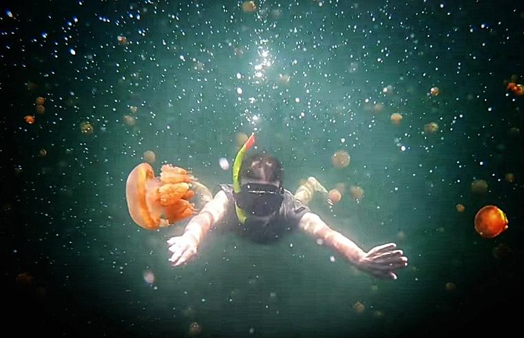 Oui, ce sont des méduses !