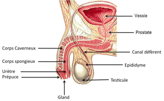 Hypertrophie bénigne de la prostate : l'opération