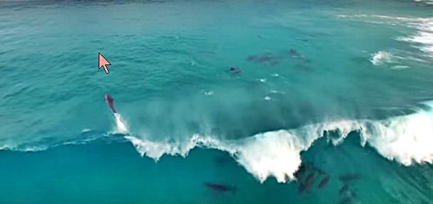 Les dauphins surfent aussi !