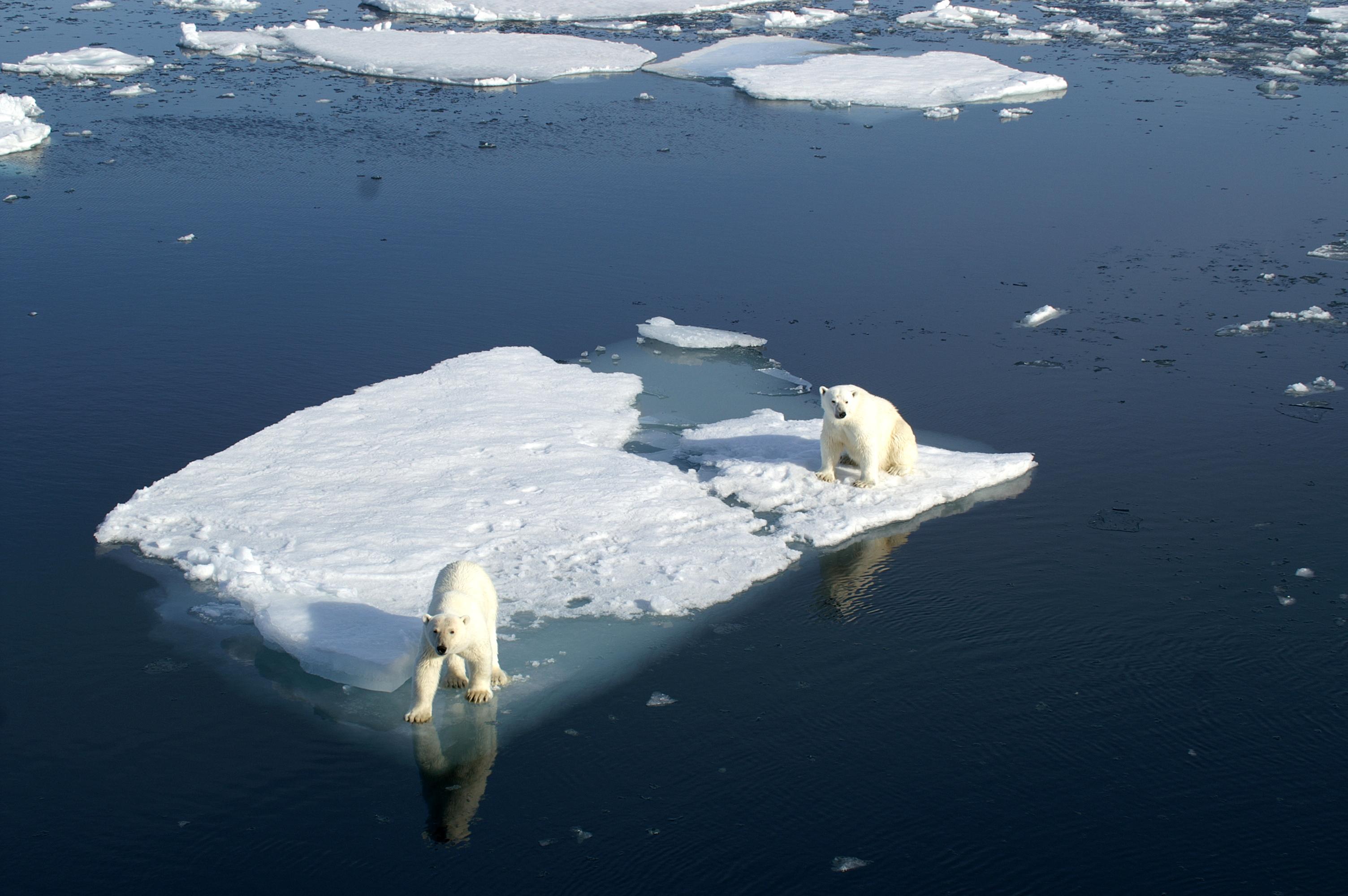 Des températures positives au Pôle Nord au lieu des -20 degrés habituels