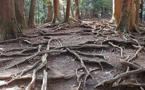 Le secret des arbres