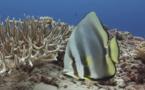 Un magnifique documentaire sous-marin : le jardin de Dakuwaka