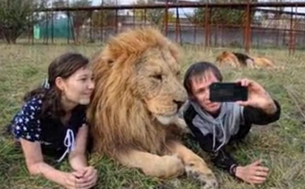 Si vous avez un faible pour les lions...